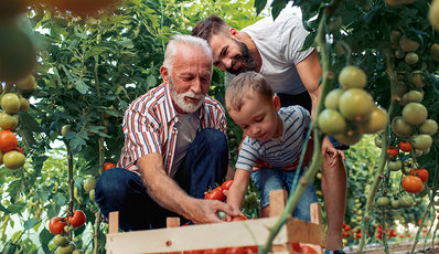 Photo of a multi-generational family picking tomatoes